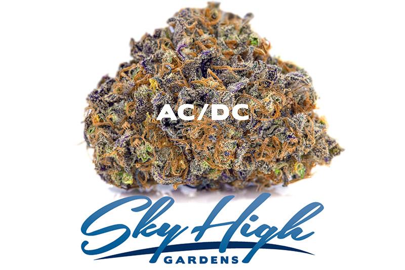 Photo of AC/DC Strain Bud