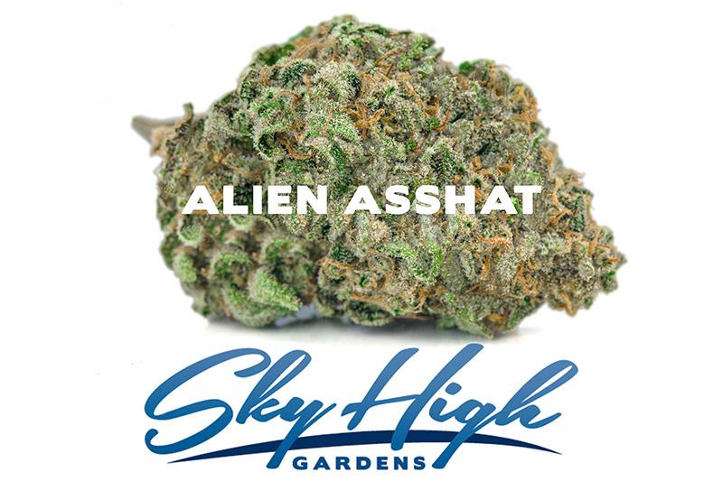 Photo of Alien Asshat Strain Bud