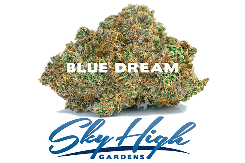 Photo of Blue Dream Bud