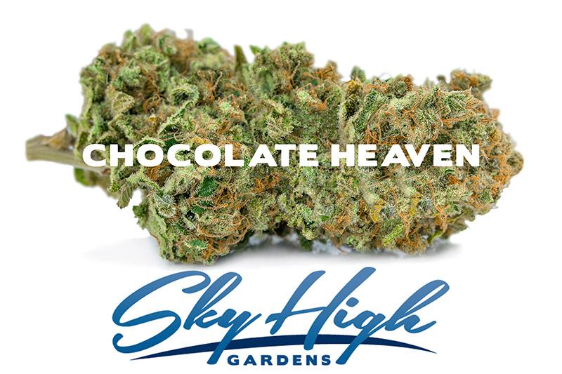 Photo of Chocolate Heaven Bud