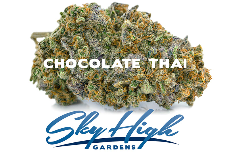Branded Image of the Chocolate Thai Strain