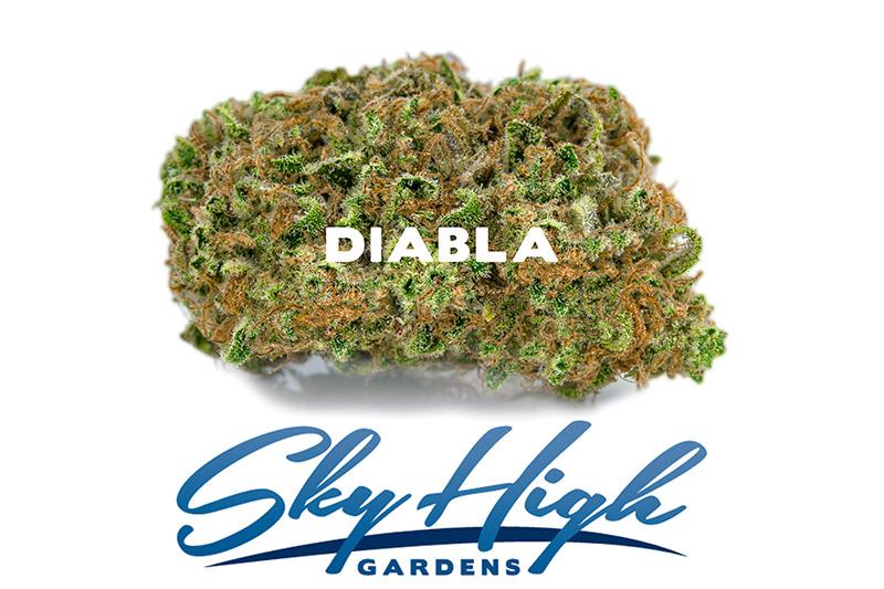 Photo of Diabla strain's flower