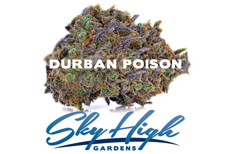Photo of Durban Poison bud