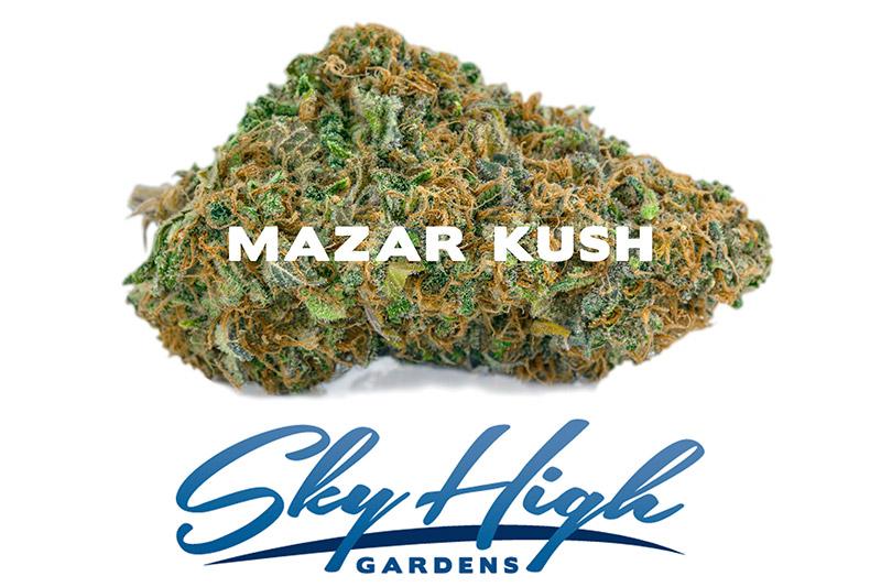 Photo of Mazar Kush's Bud