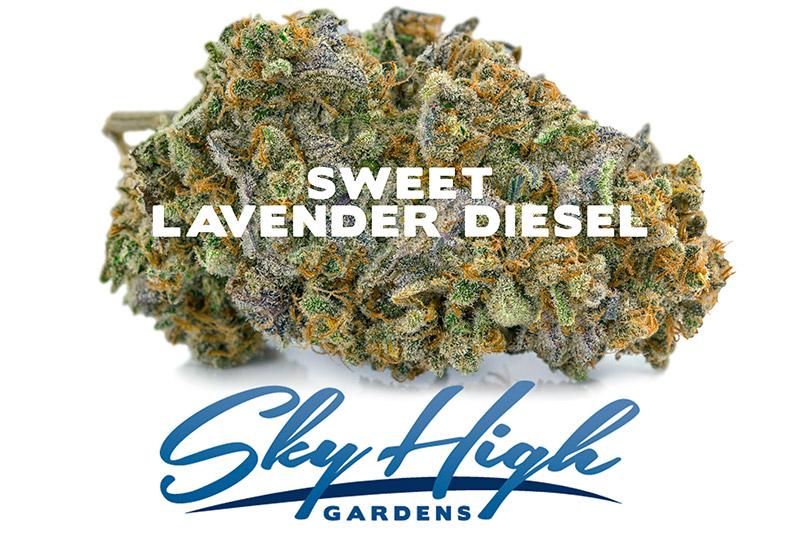 Branded photo of Sweet Lavender Diesel Strain