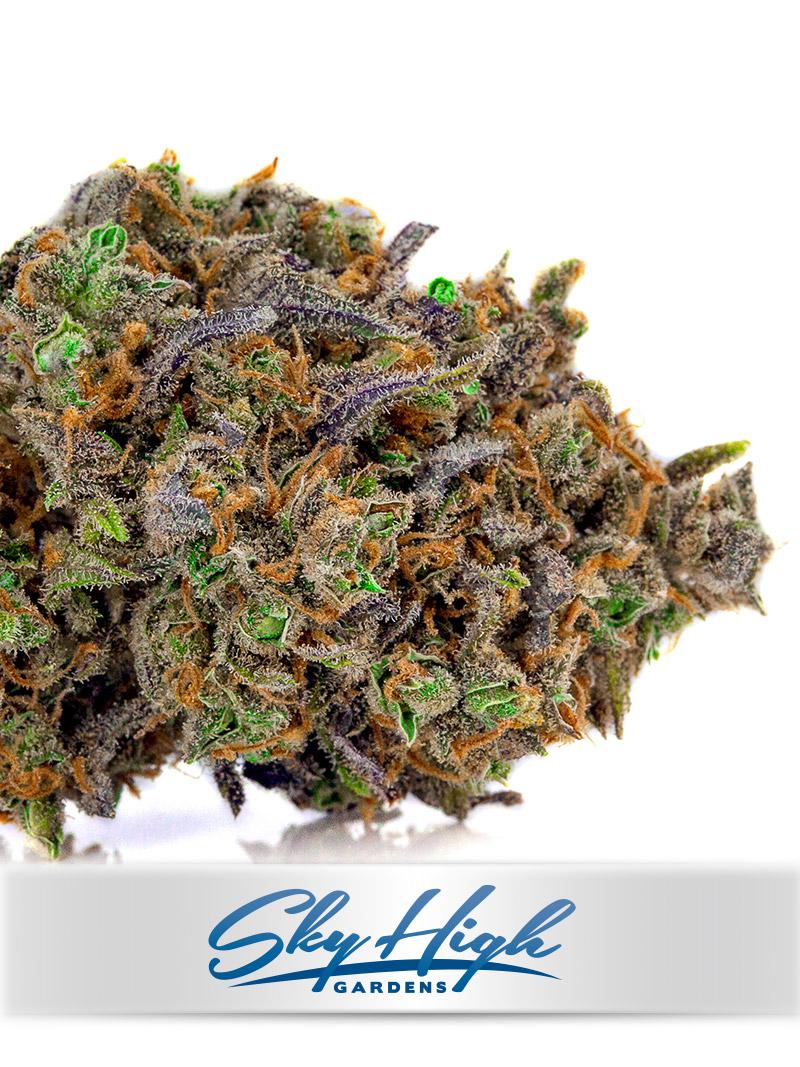 Blue-Dream-Sky-High-Gardens-Cannabis-sativa-2 | Sky High Gardens